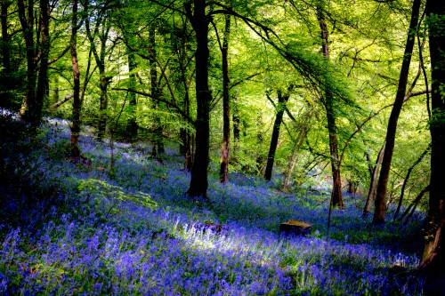 Blue Horizon Photography - Tintern - Bluebells In Wales